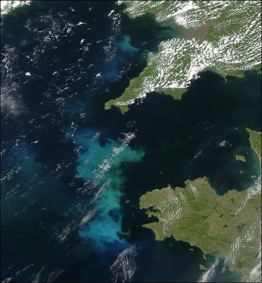 Phytoplankton Bloom off France and UK