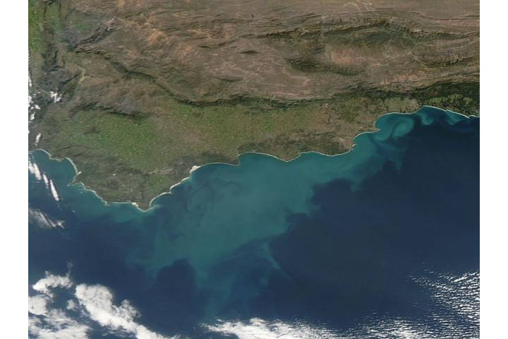 Phytoplankton bloom off South Africa - selected image