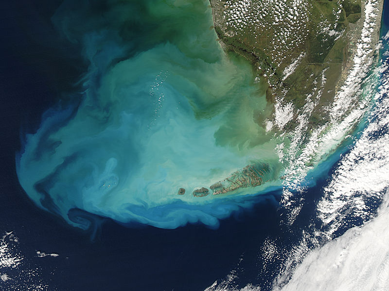 Resuspened bottom sediments off Florida - related image preview