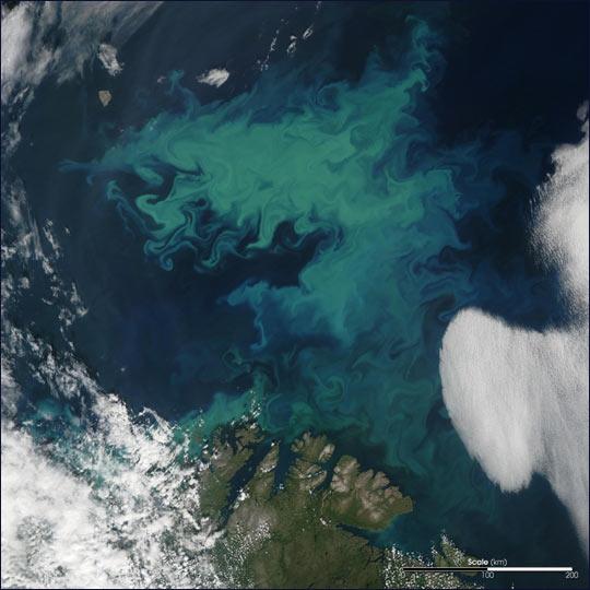 Phytoplankton Bloom Near Norway