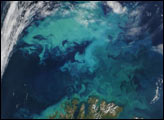 Phytoplankton Bloom Near Norway