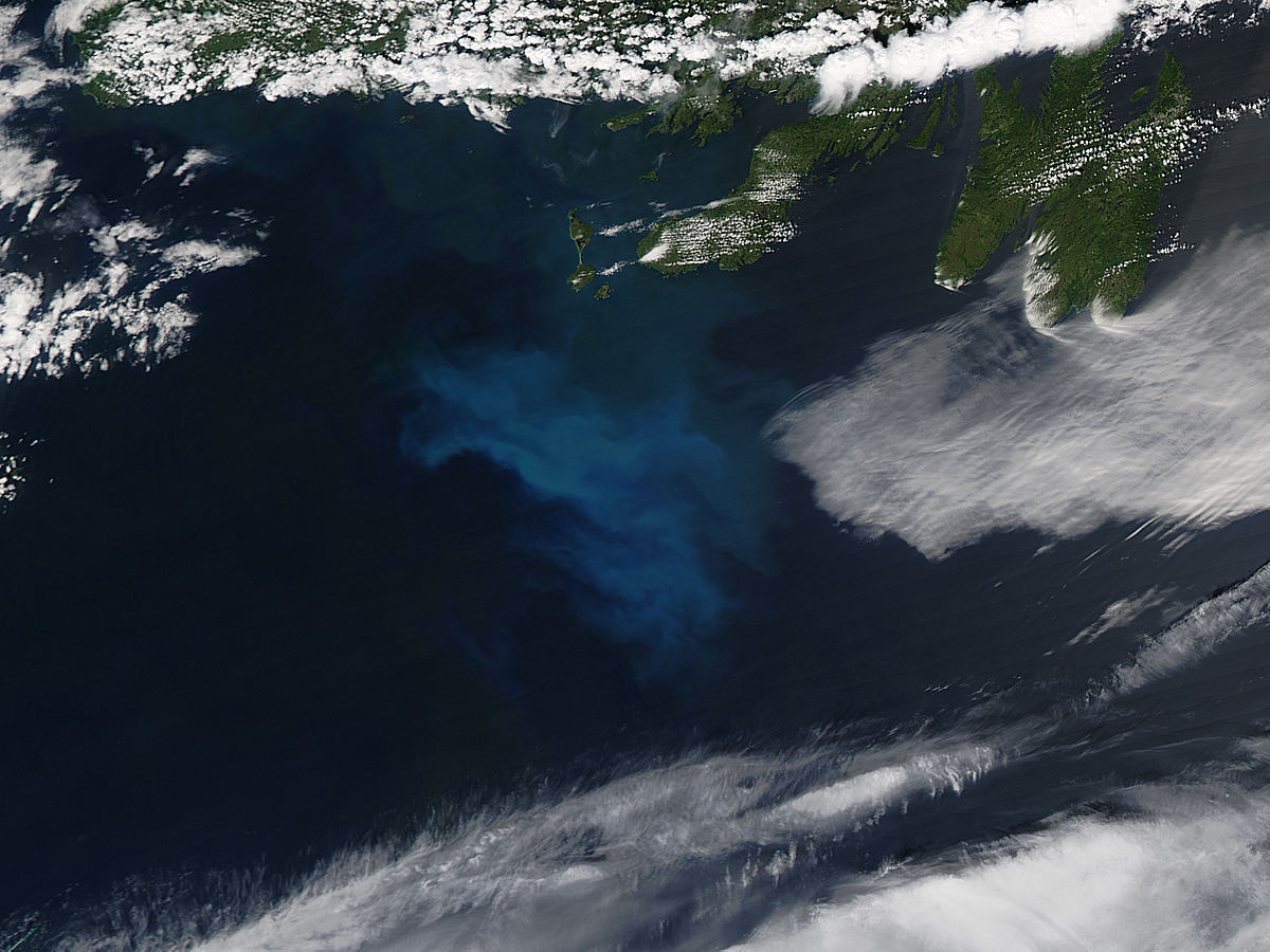 Phytoplankton bloom off Newfoundland Island - related image preview