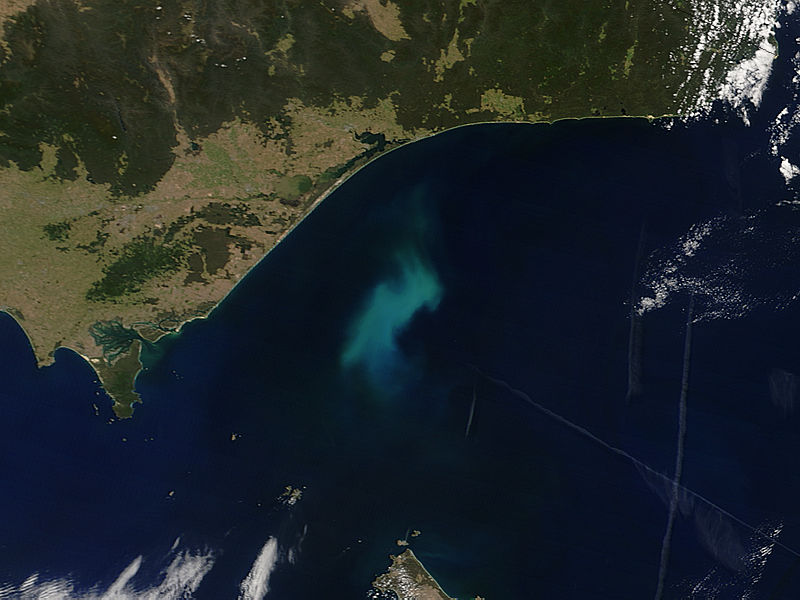 Phytoplankton bloom off southeastern Australia - related image preview