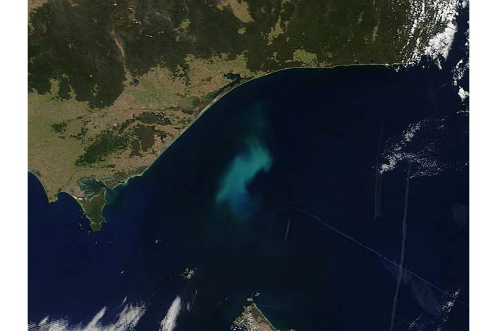 Phytoplankton bloom off southeastern Australia - selected image