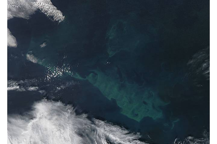 Phytoplankton bloom in the North Atlantic Ocean - selected image