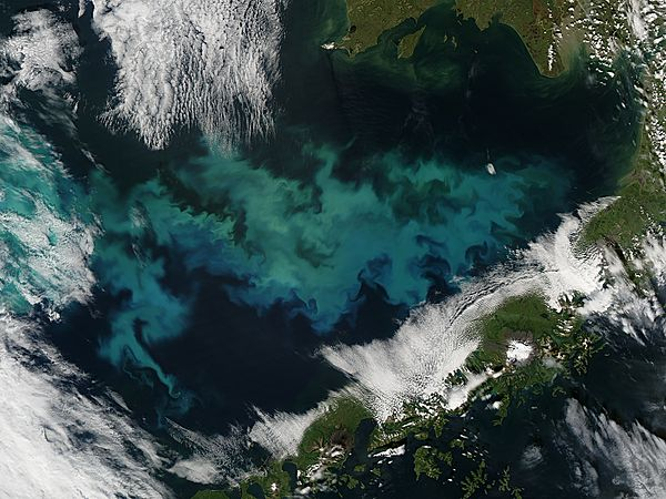 Phytoplankon bloom in the Bering Sea - related image preview