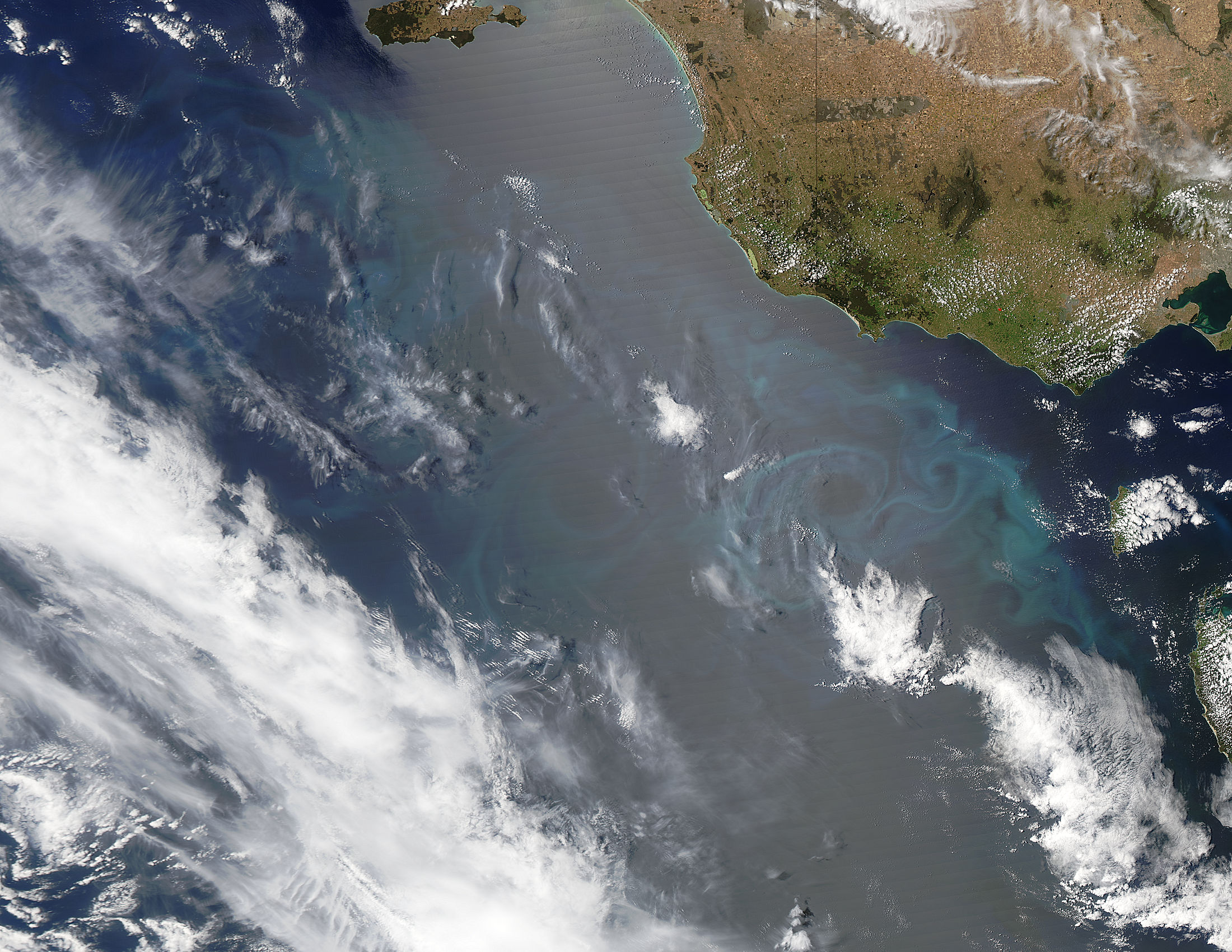 Phytoplankton bloom off Australia - related image preview