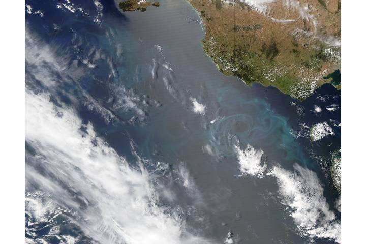 Phytoplankton bloom off Australia - selected image