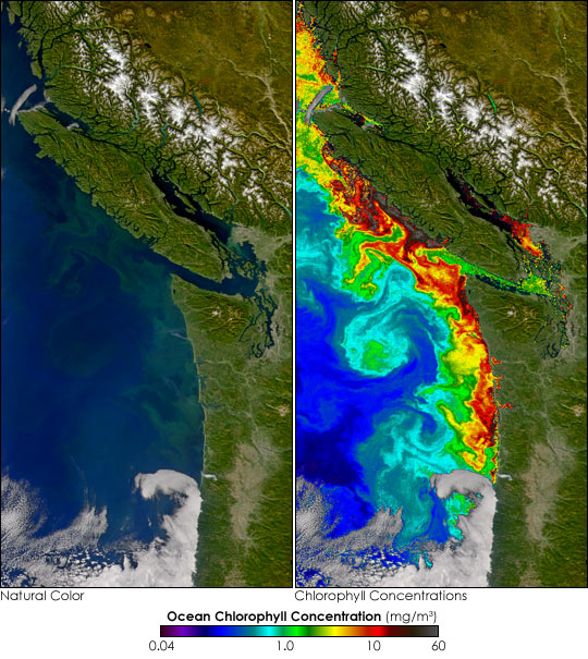 Toxic Algal Bloom off Washington - related image preview