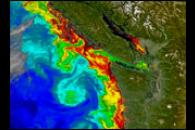 Toxic Algal Bloom off Washington