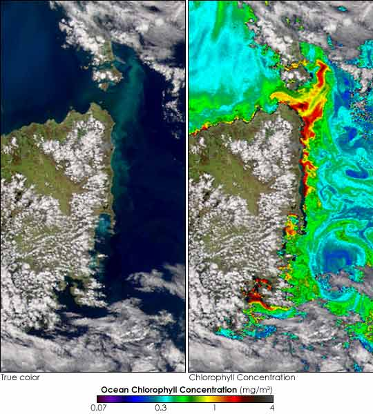 Algal Bloom off Tasmania - related image preview