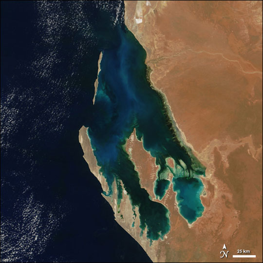 Phytoplankton in Shark Bay