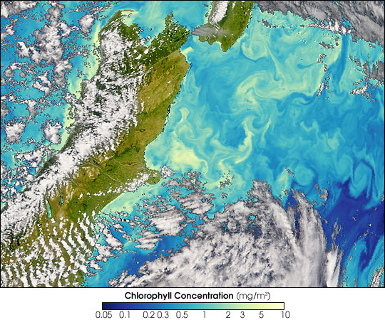 Subtropical Blooms in New Zealand Waters - related image preview