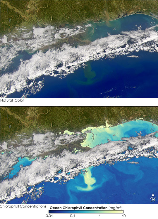 Phytoplankton Bloom in the Gulf of Mexico - related image preview