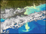 Phytoplankton Bloom in the Gulf of Mexico - selected image