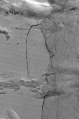 Iceberg breaking off from Larsen C ice shelf, Antarctica (Day/Night Band) - related image preview