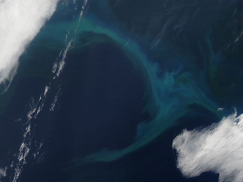 Phytoplankton bloom in the North Pacific Ocean - related image preview