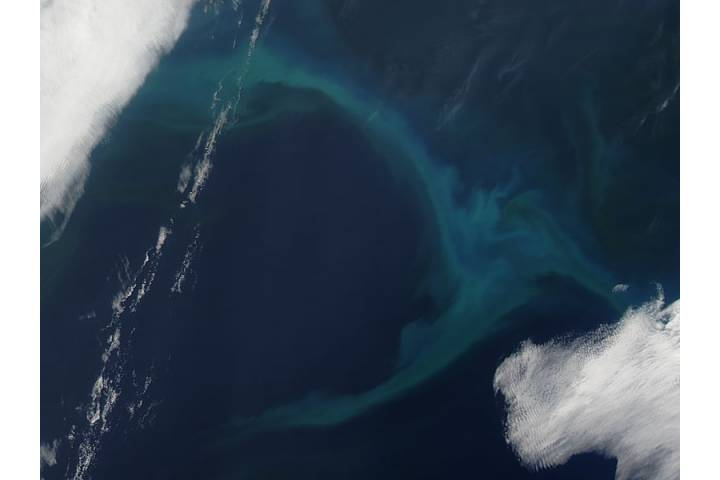 Phytoplankton bloom in the North Pacific Ocean - selected image
