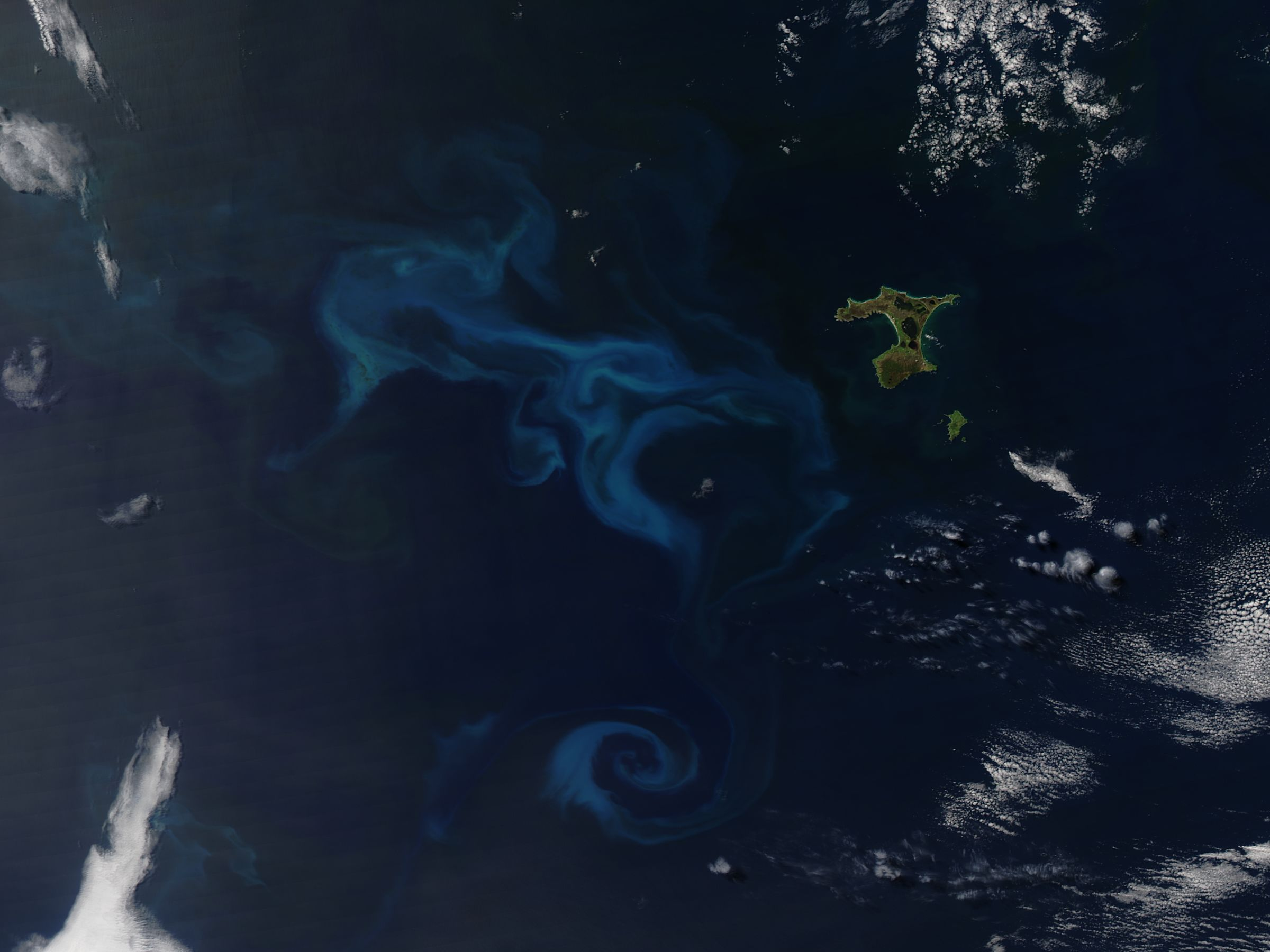 Phytoplankton bloom off Chatham Island, South Pacfic Ocean - related image preview