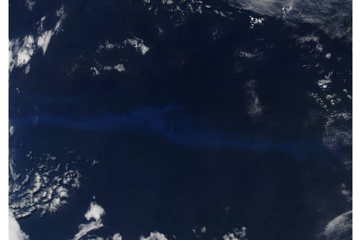 Phytoplankton bloom in the South Atlantic Ocean - selected image