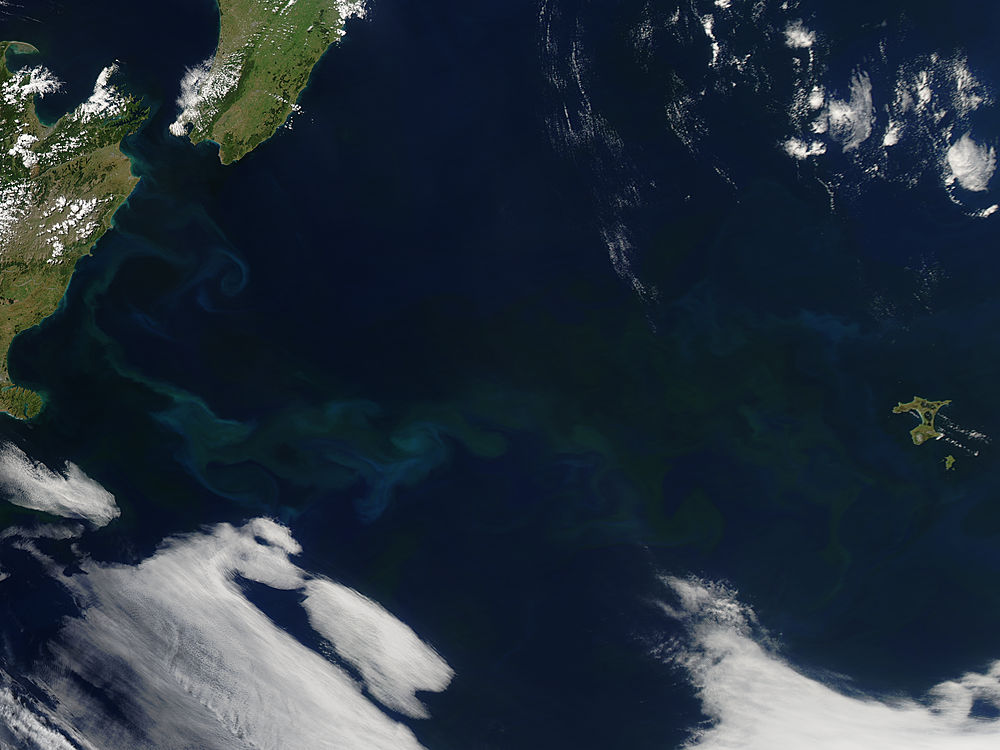 Phytoplankton bloom off New Zealand - related image preview