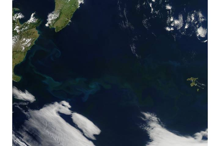Phytoplankton bloom off New Zealand - selected image