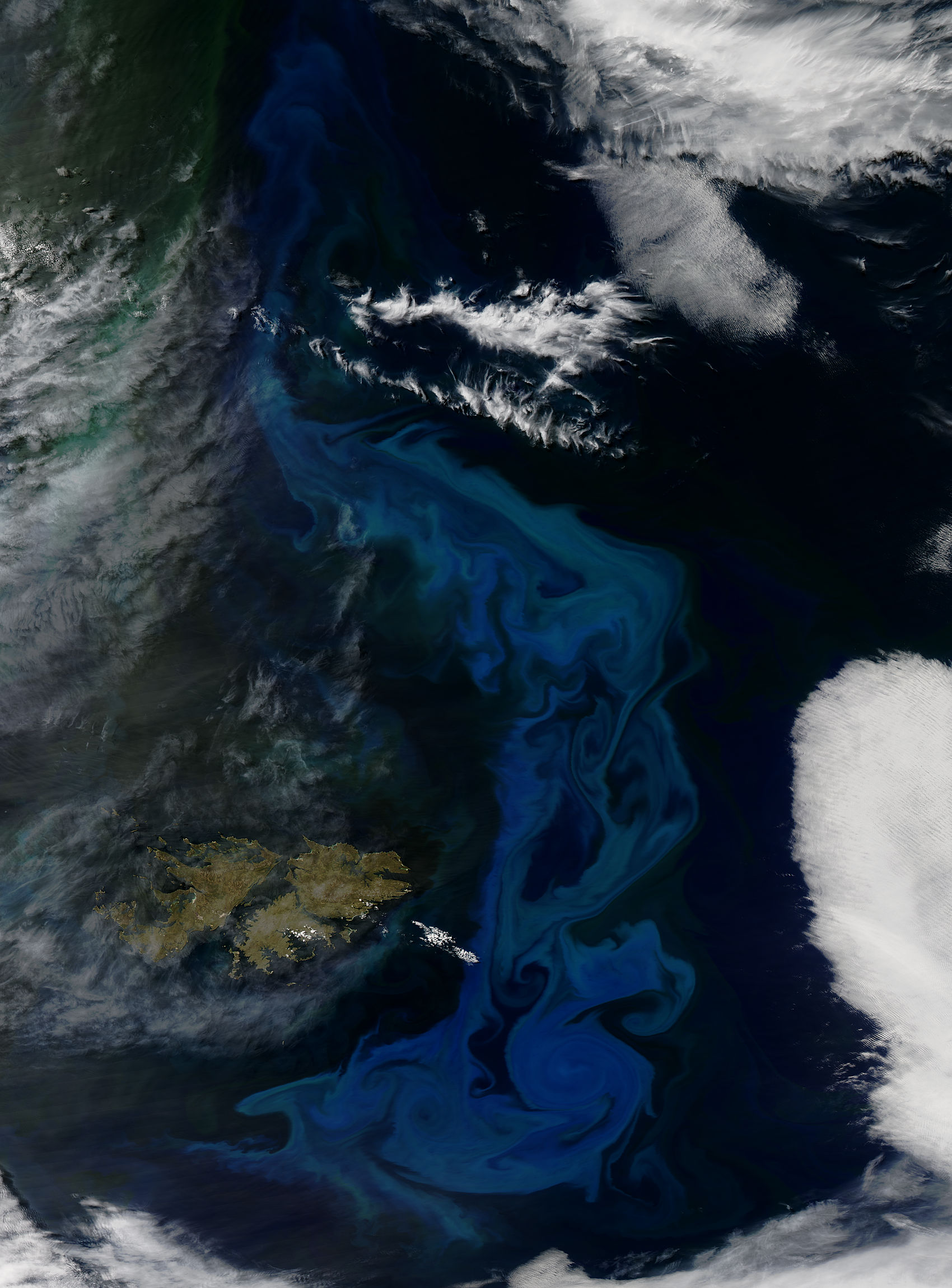 Phytoplankton bloom off the Falkland Islands - related image preview