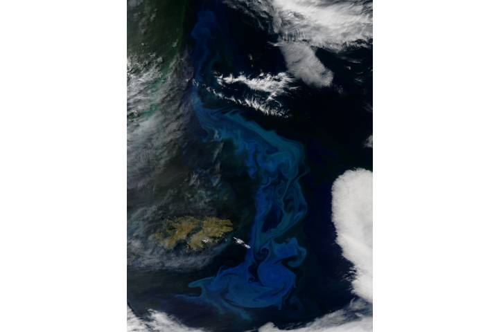 Phytoplankton bloom off the Falkland Islands - selected image
