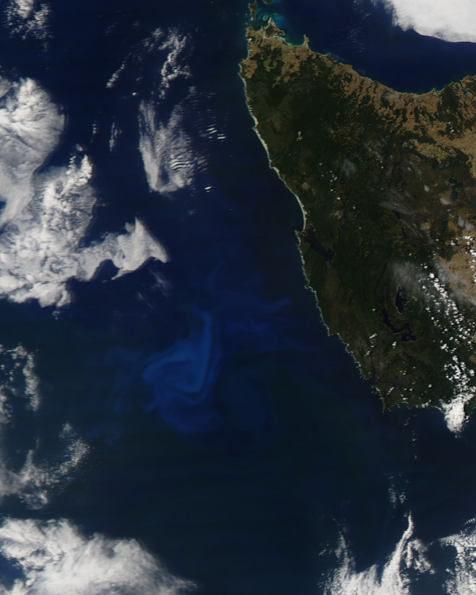 Phytoplankton bloom off Tasmania - related image preview