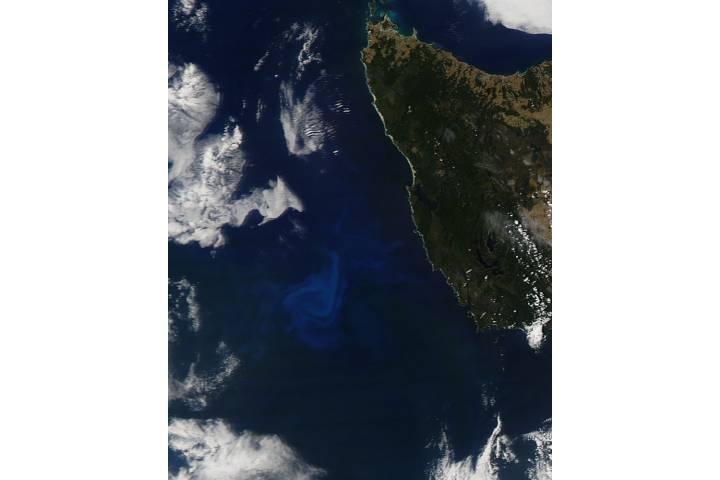 Phytoplankton bloom off Tasmania - selected image