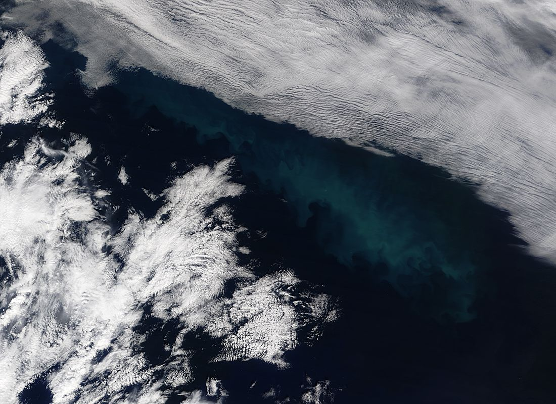 Phytoplankton bloom in the North Atlantic Ocean - related image preview