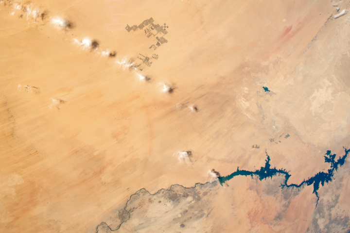 Agriculture in Egypt's Western Desert