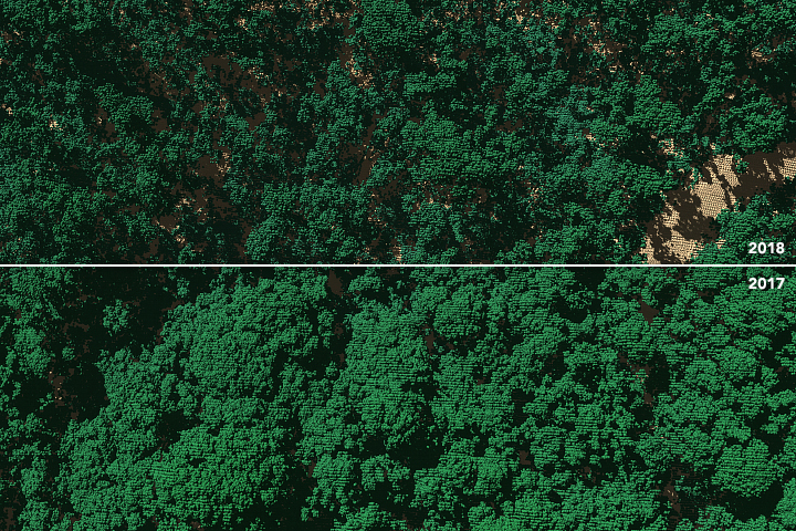 A Haircut for Puerto Rico's Forests - related image preview