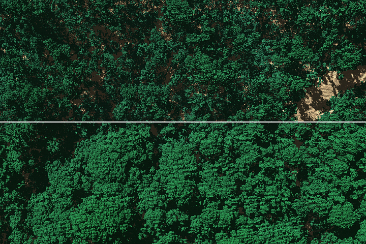 A Haircut for Puerto Rico's Forests - selected image