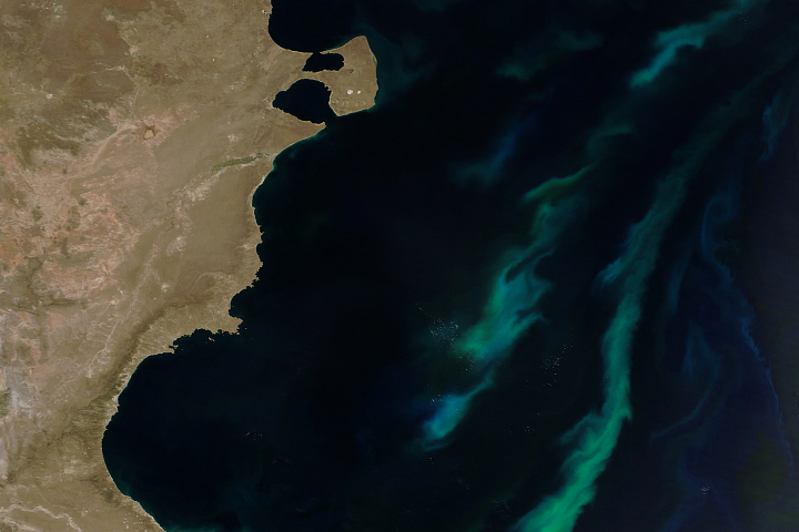 Summer Bloom in the Argentine Sea
