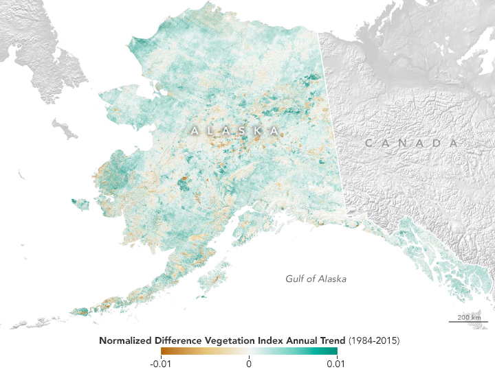 Alaska in Flux: Wildfire Recovery Paints Alaska Green - related image preview