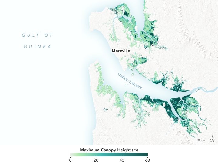New Satellite-Based Maps of Mangrove Heights - related image preview