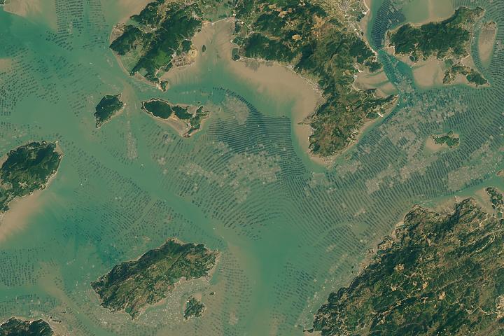 Seaweed and Fish World