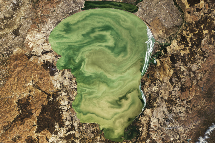 Eerie Green Swirls of Lake Khanka