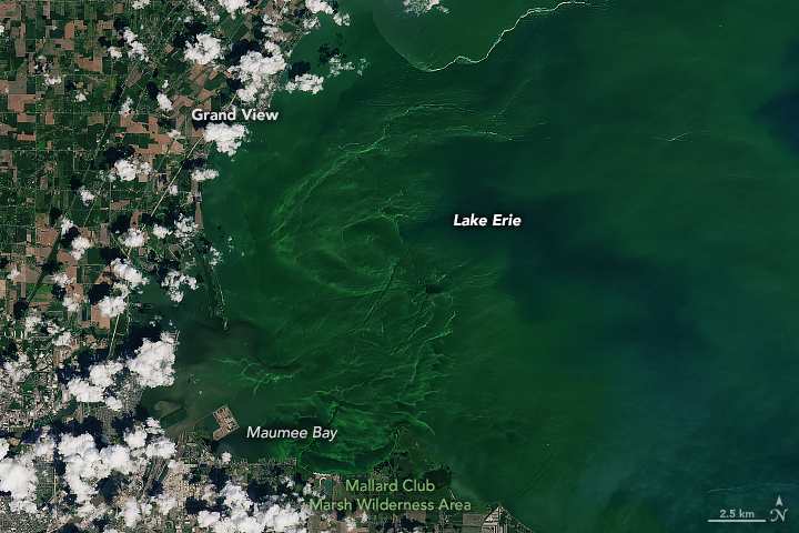 Eerie Blooms in Lake Erie