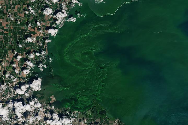 Eerie Blooms in Lake Erie