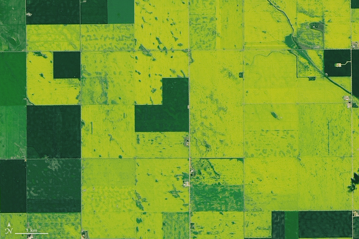 Canadian Canola Fields - related image preview