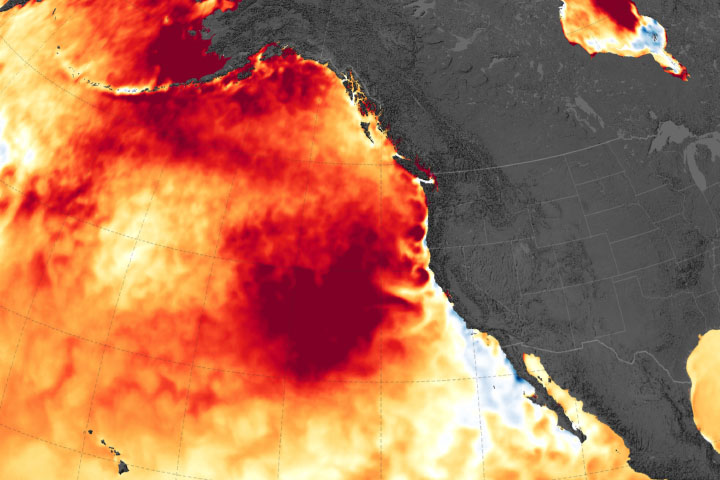 Marine Heat Wave Returns to the Northeast Pacific - selected image