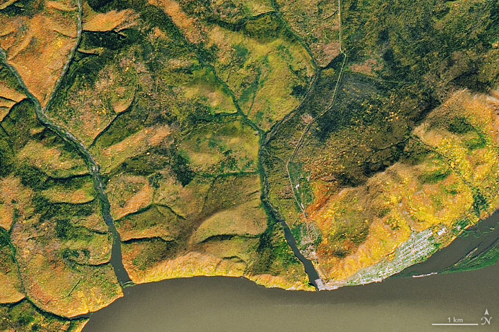 Autumn Along the Amur - related image preview