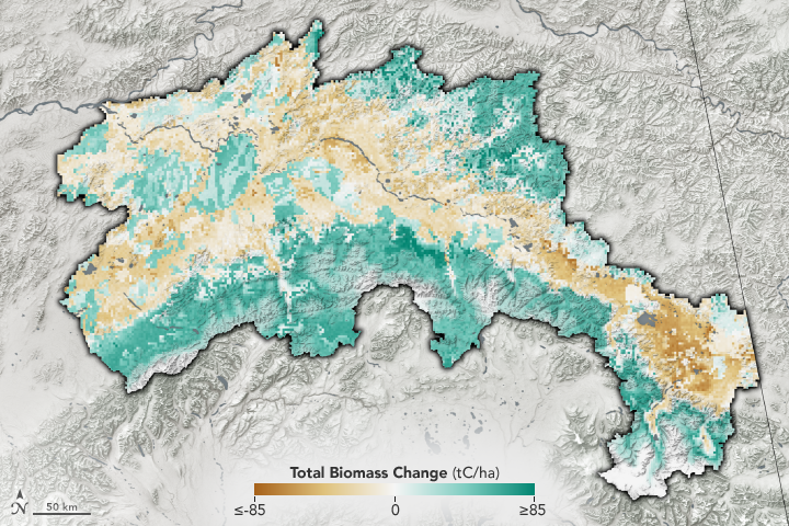 Warmer, Drier Climate Could Transform Alaskan Forests - related image preview