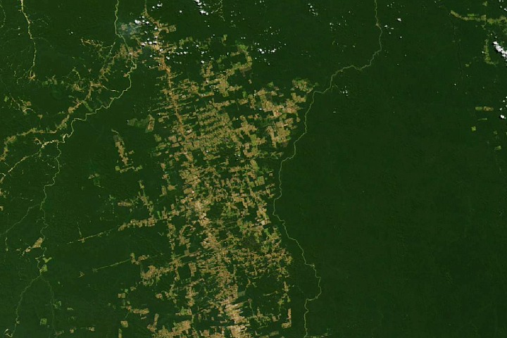 Making Sense of Amazon Deforestation Patterns - selected image