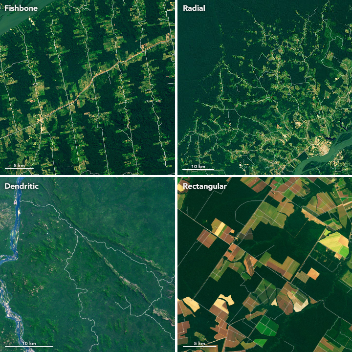 Making Sense of Amazon Deforestation Patterns
