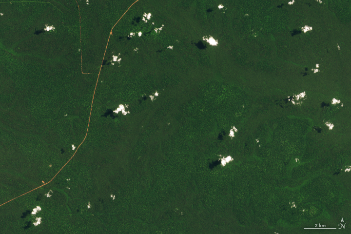 When a Road Leads to Deforestation - related image preview