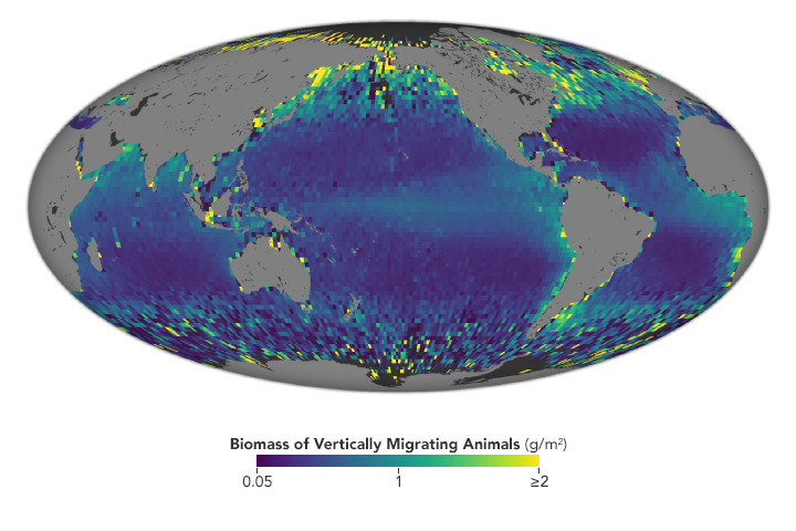 Satellite Observes Massive Ocean Migration - related image preview