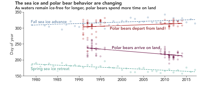 Polar Bears Struggle as Sea Ice Declines - related image preview
